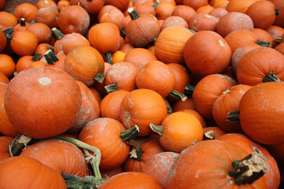 Image result for pumpkin dance to anything