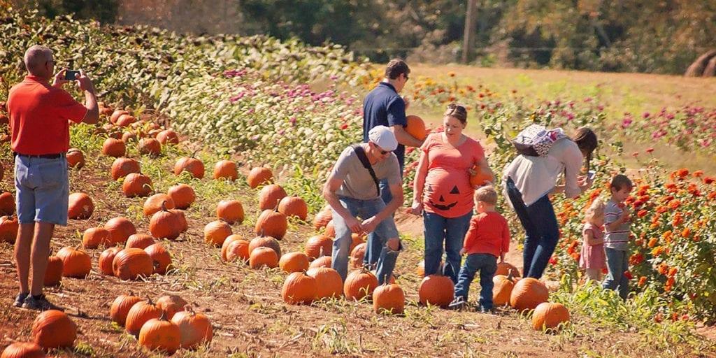 pumpkin patch at denver downs farm