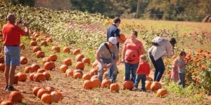 pumpkin patch at denver downs farm